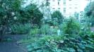 Willkommens-Kultur-Garten Spandau _7